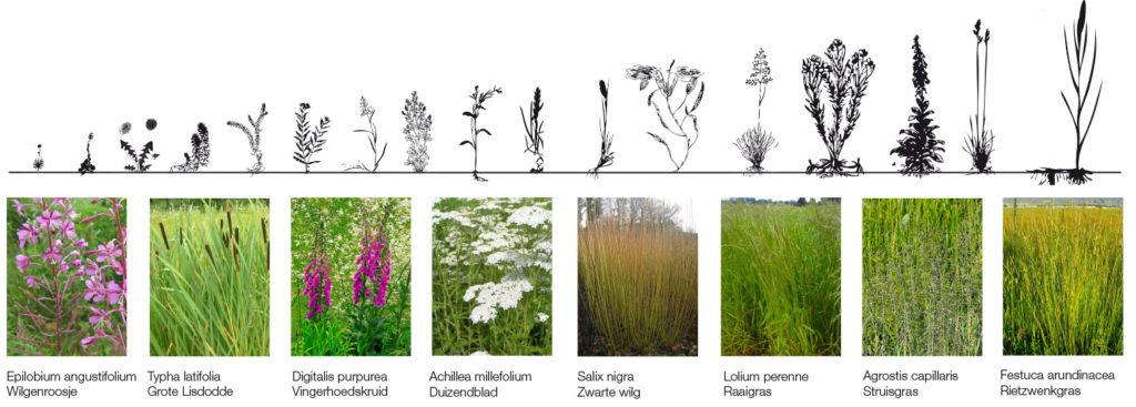 zuiverende tuin schema